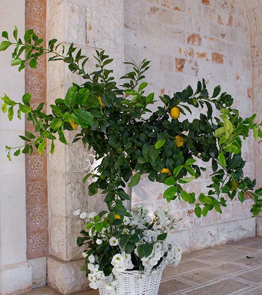 Wedding Apulia flowers