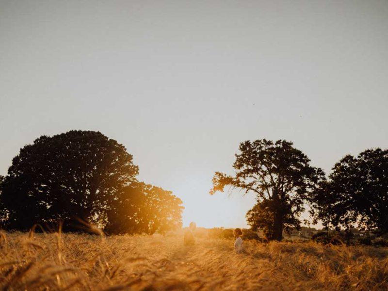 wedding in puglia angelo e celeste nei campi al tramonto